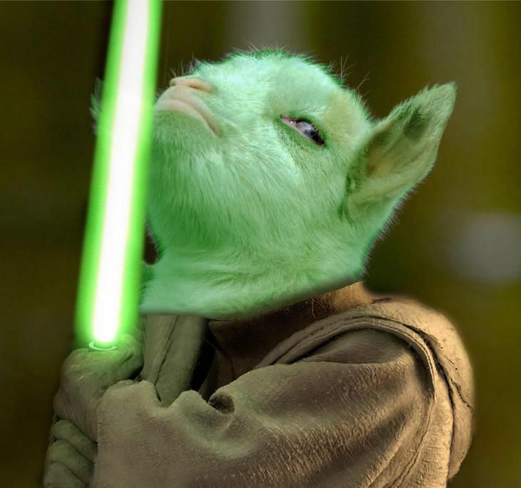 """cabrita presumida con el photoshop de Yoda de la película """"Star Wars"""""""