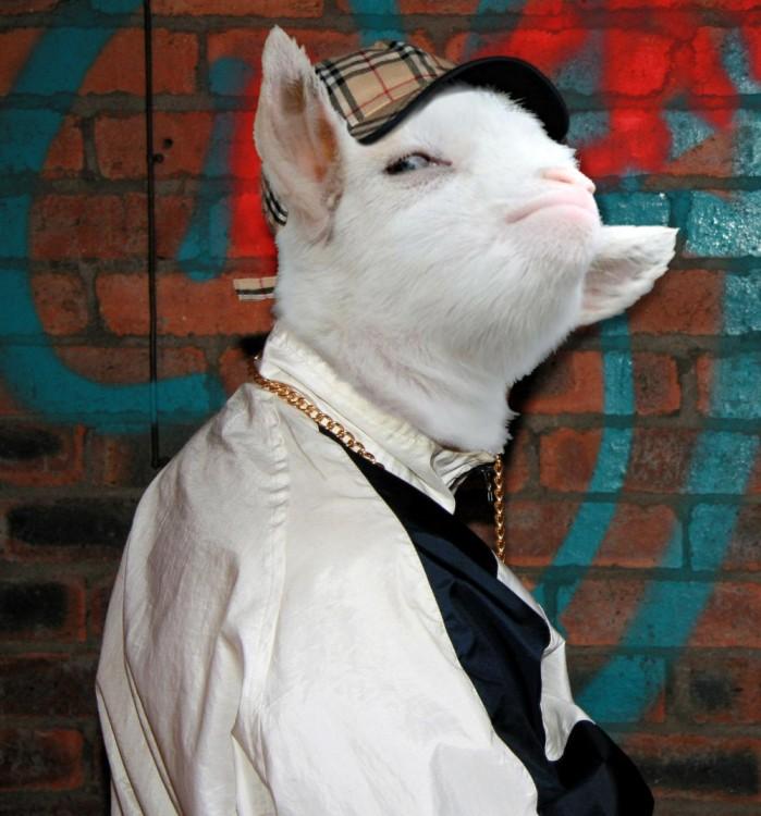 cabra presumida photoshopeada como thug live