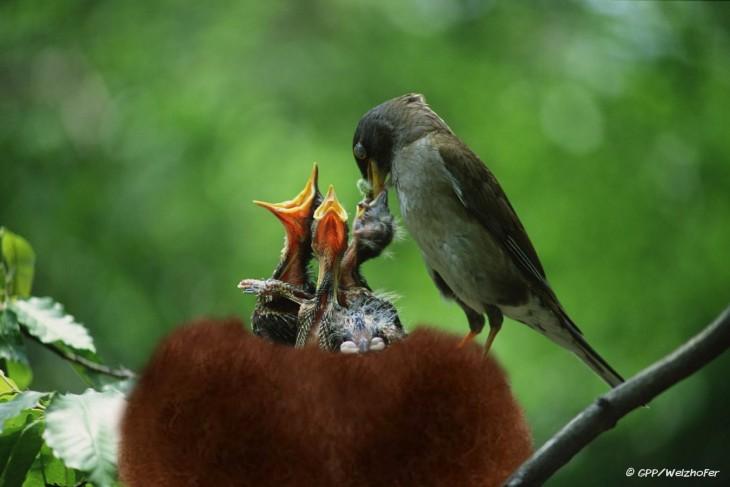 Batalla de photoshop al hombre de la barba convertida en un nido de pájaros