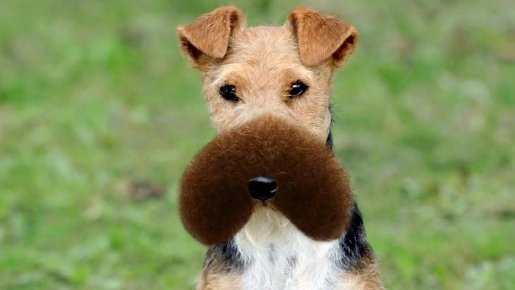 Batalla de photoshop al hombre de la barba sobre el hocico de un perro
