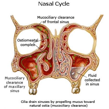 ¿Qué significa cuando un lado de la nariz está obstruido?