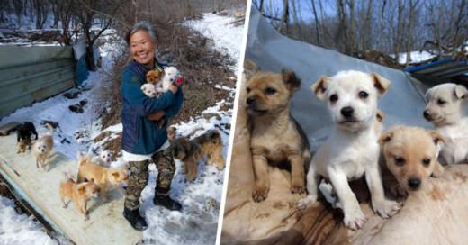 mujer Coreana que se dedica a salvar perros de los restaurantes