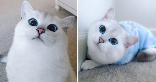 El gato con los ojos mas bonitos del mundo