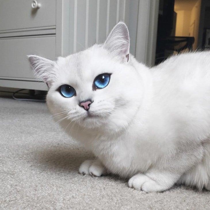 Corby, el gato de ojos azules con el delineado perfecto cerca de un mueble