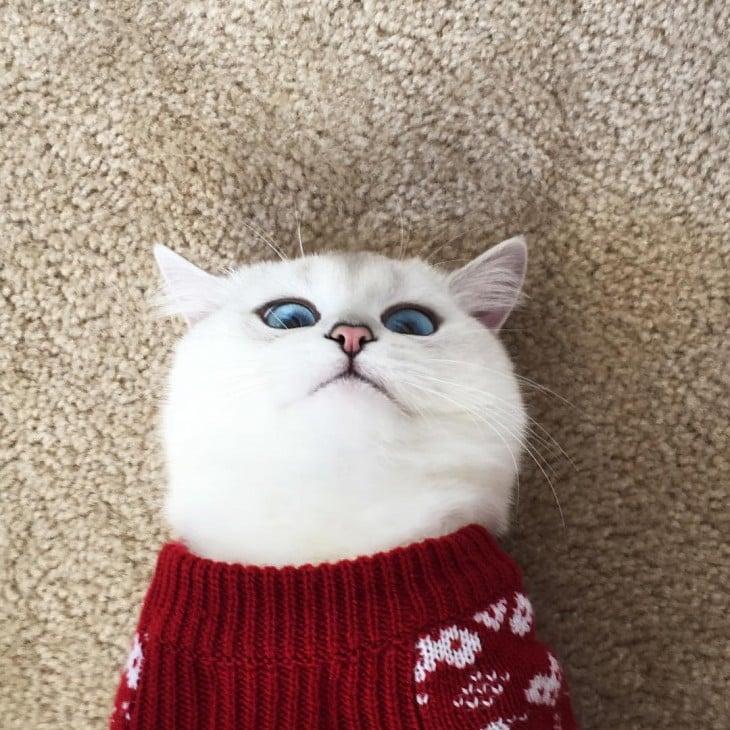 Corby, el gato con el delineado perfecto acostado en el suelo con un suéter rojo