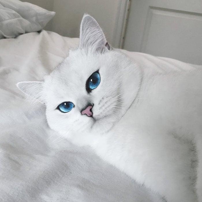 Corby, el gato con el delineado perfecto acostado
