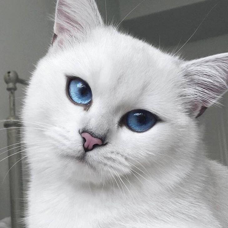 Corby, el gato de ojos azules con el delineado perfecto