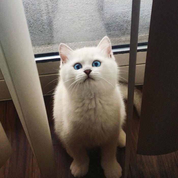 Corby, el gato con el delineado perfecto sentado cerca de la ventana