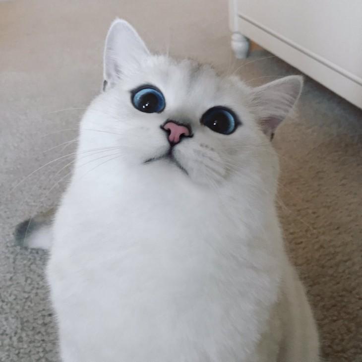 Corby el gato sentado en el piso con una mirada tierna