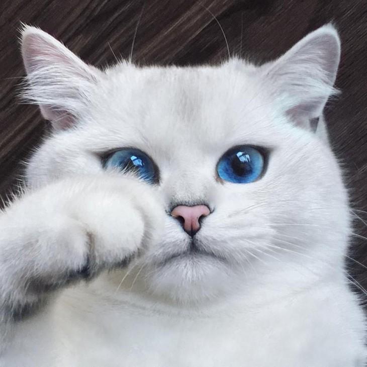 Corby, el gato con el delineado perfecto