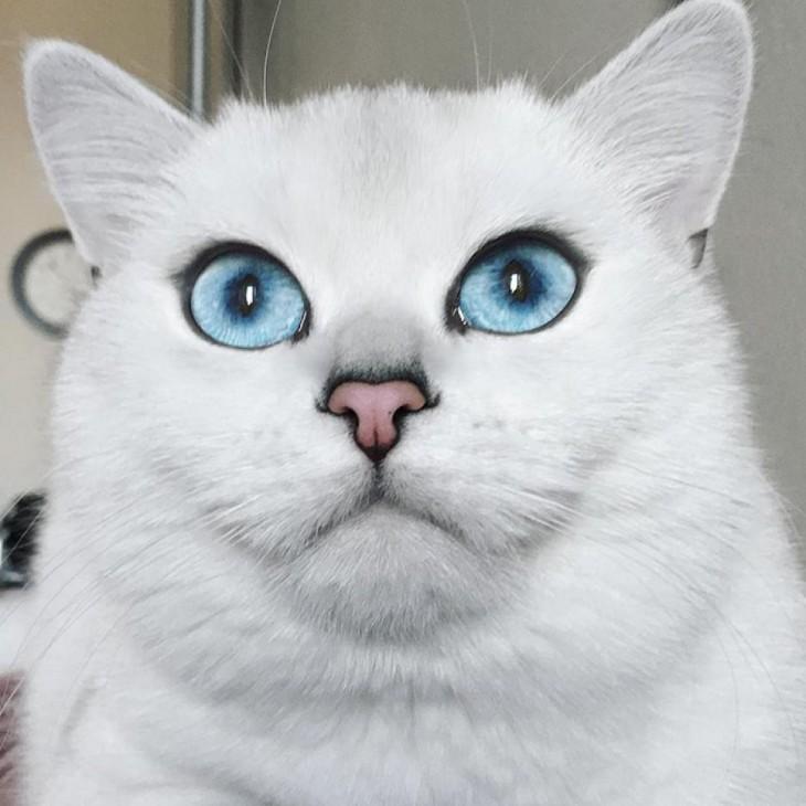 Cara de Corby el gato mostrando su delineado perfecto