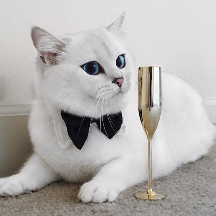 Corby, el gato con el delineado perfecto con un moño en el cuello y una copa dorada frente a él
