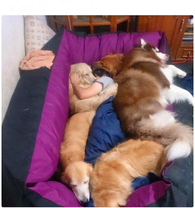 chica dormida rodeada de perros