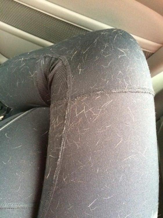 pans de una chica llena de pelos de perro