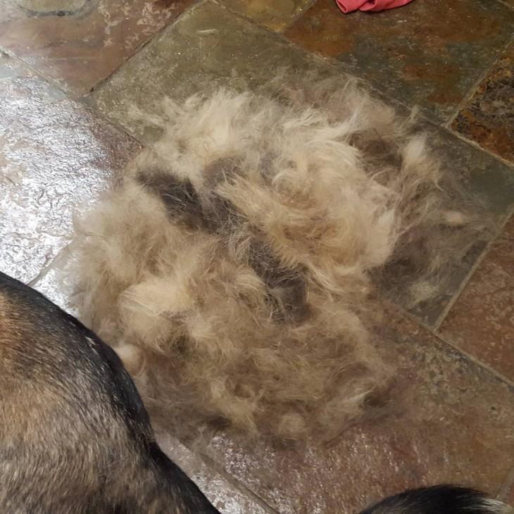bola de pelos de perro en el suelo