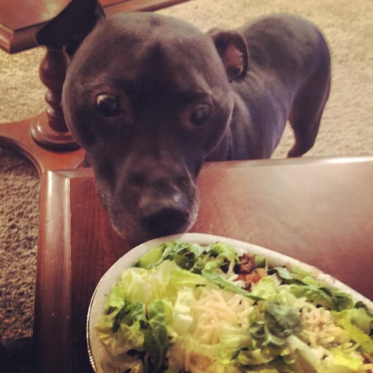cara de un perro viendo un plato de comida sobre una mesa
