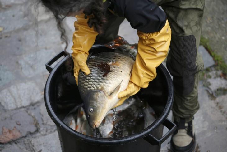 Peces sacados del canal Saint-Martin en París