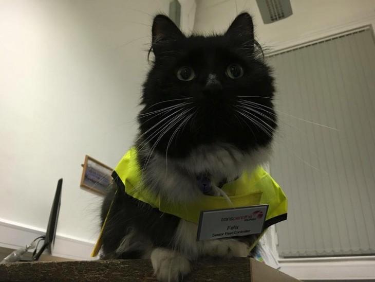Félix, el gato que trabaja en una estación de Inglaterra