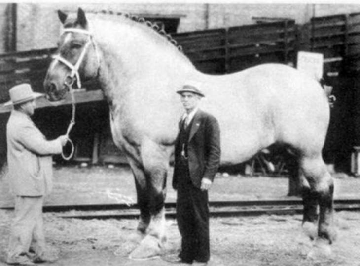 Este es el caballo más grande del mundo de toda la historia