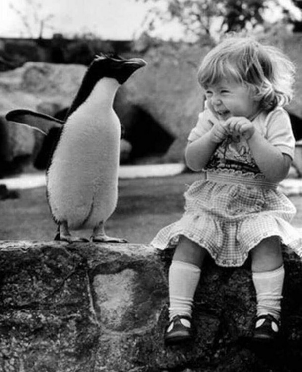 Niña conoce a un pingüino por primera vez