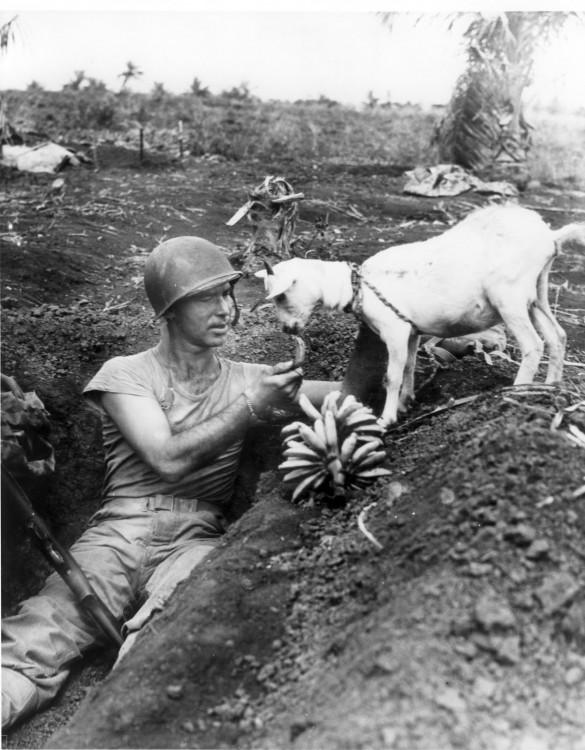 soldado regalando un poco de plátano a las cabras que quedaron entre el atroz desastre de las guerras