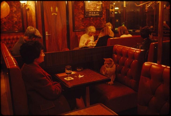 Caramel, un habitual del café Le Louis IX en París, haciendo compañía a una clienta, 1988