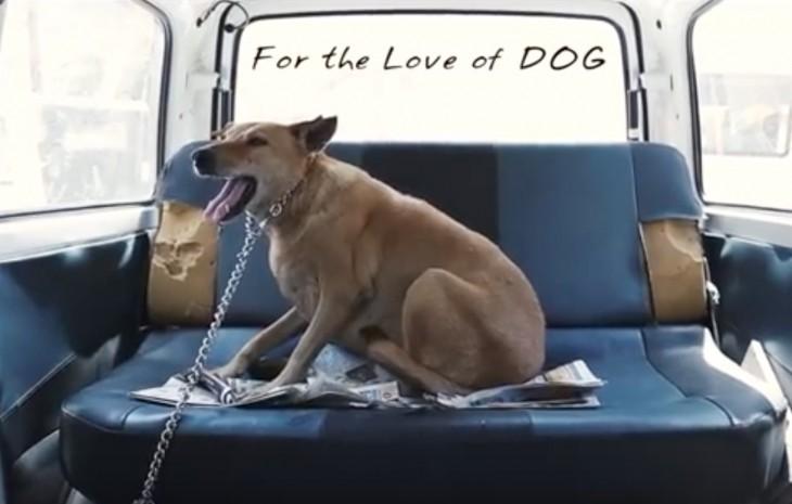 perro dentro de la ambulancia para perros del hombre en la India