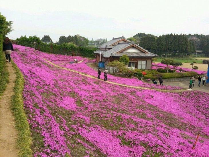 Hombre plantó un jardín para que su esposa ciega lo oliera