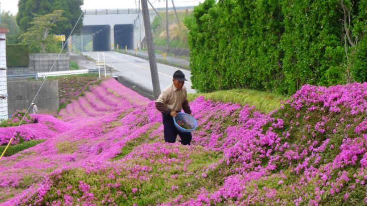 Hombre plantando flores en su granja en Japón