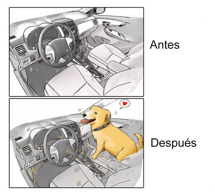 imagen que muestra el antes y después de tu carro cuando tienes una mascota