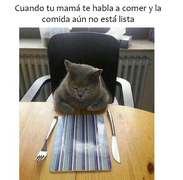 meme de un gato cuando tu mamá te habla y la comida aún no está lista