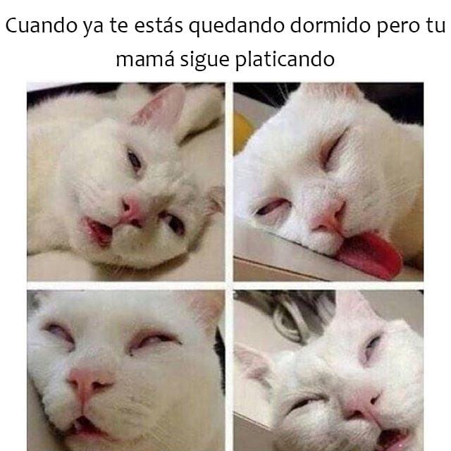 meme de un gato blanco que imita a cuando ya te estás quedando dormido y tu mamá está platicando