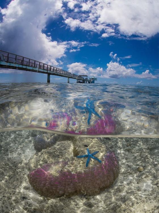 Fotografía que muestra un muelle y un poco debajo del mar
