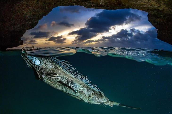 Fotografía que muestra una iguana debajo del mar y una parte del cielo