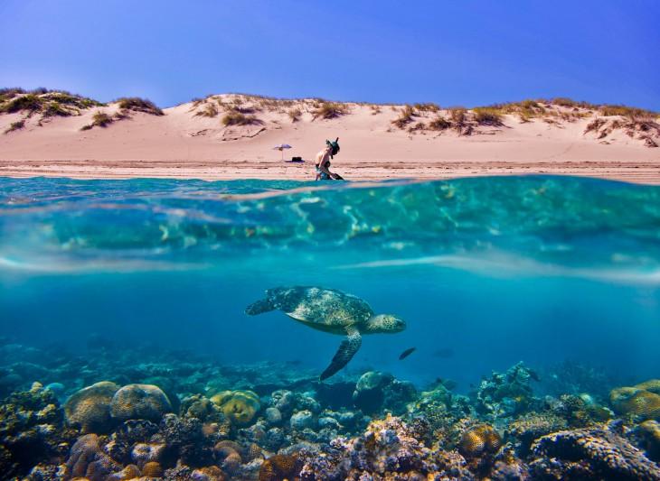 Fotografía que muestra a una chica hincada en la areana y una tortuga nadando bajo el agua