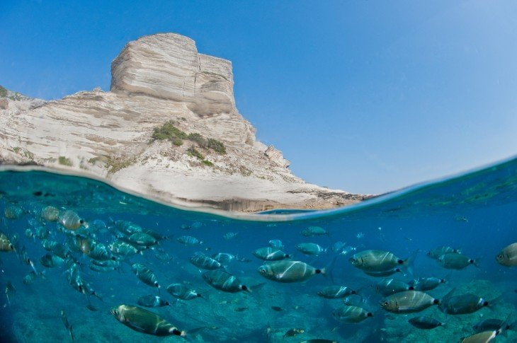 Fotografía que muestra una parte de una montaña y un gran número de peces debajo del mar