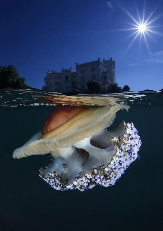 Fotografía que en la superficie muestra el Castillo Miramare y debajo del mar un hermoso animal