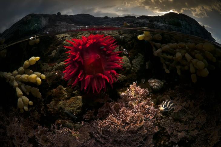 Fotografía de la superficie del mar en el Océano Rose en Australia