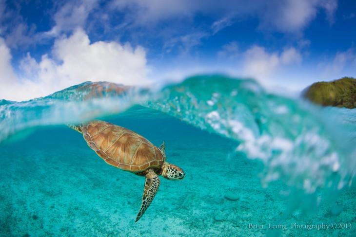 Fotografía de una tortuga en la isla Zamami