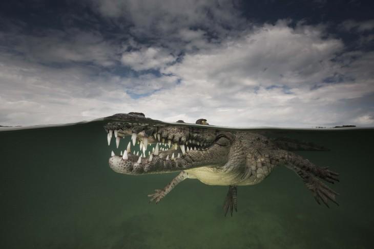 Fotografía que muestra el cielo y un cocodrilo en la superficie del mar