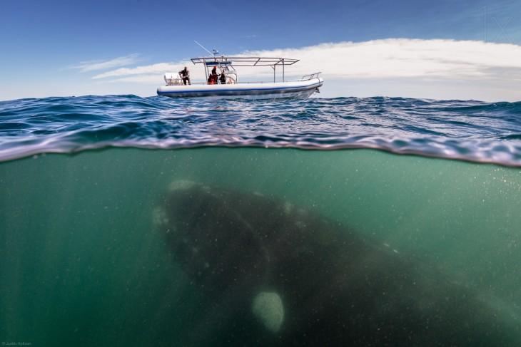 Fotografía que muestra una ballena en la superficie del mar bajo un pequeño barco