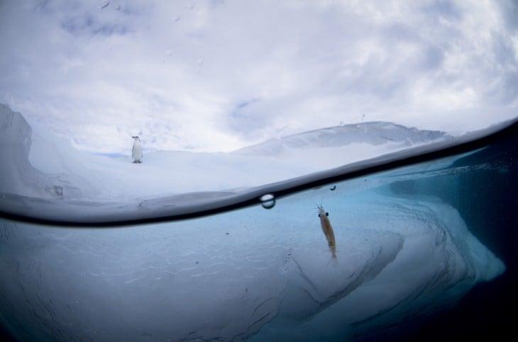 Fotografía que muestra la superficie de un lugar congelado