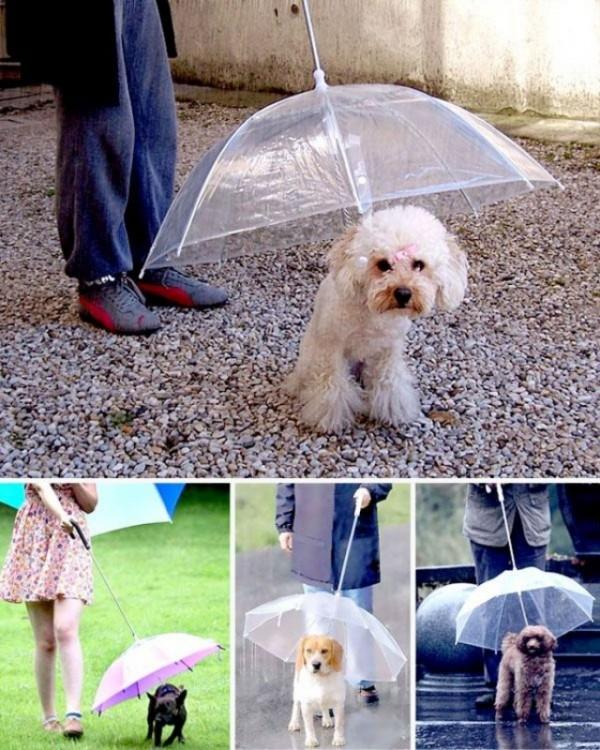 Paraguas ideales para tus mascotas
