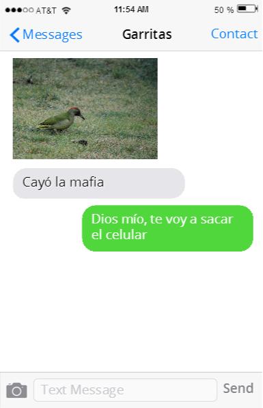 GATO CAYÓ LA MAFIA