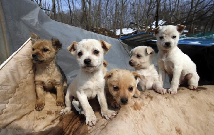 Perritos rescatados por una mujer de 61 años en Corea del Sur