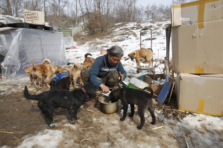 Jung Myoung Sook mujer coreana del sur alimentando a los perros que rescata de las calles
