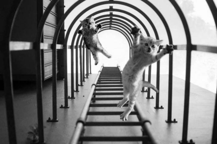photoshop de la imagen ganadora del concurso nikon con dos gatos en el centro