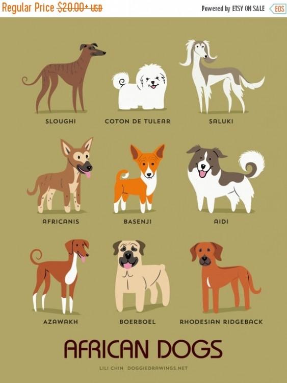 perros africanos