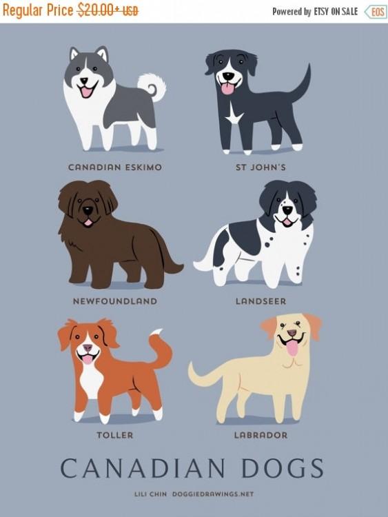 perros canadienses