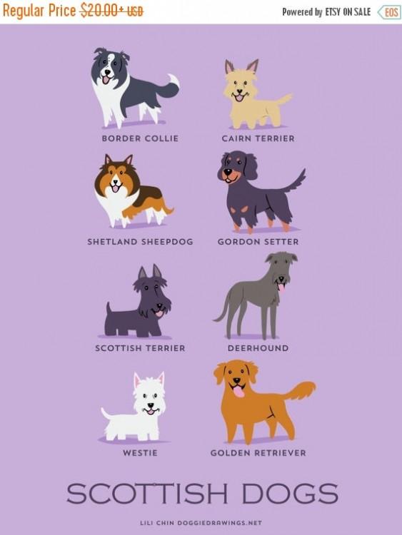 perros escoceses
